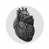 Anatomy #001 - Fizzmint