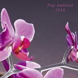 Pop Ambient 2016
